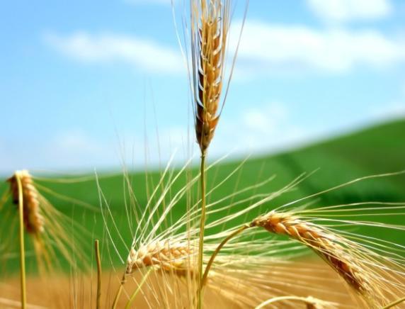 Prevenzione in agricoltura, convegno a Treia